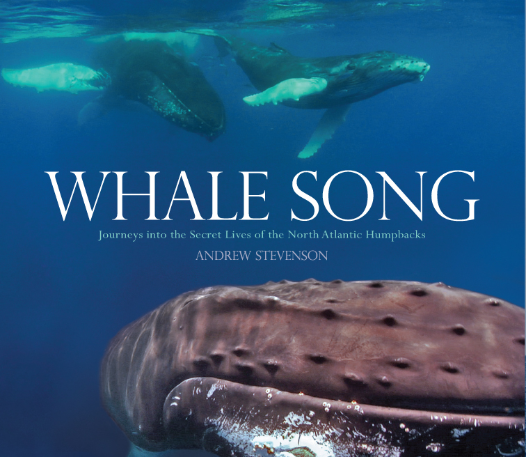 whale_song_cover